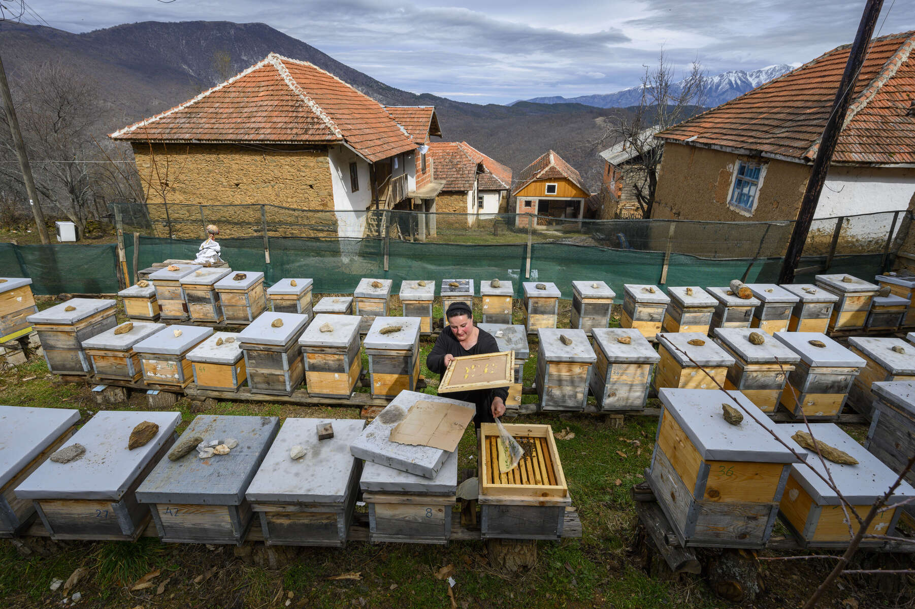 March 6, 2020; Beekeeper Cana Djukovska checks the bees in one of the hives in Zagrad, North Macedonia. Cana has been a beekeeper for 5 years and has 60 beehives. MBA students from Notre Dame traveled to the region to study agricultural businesses as part of their Business on the Frontlines course which examines the impact of business in societies affected by extreme poverty and conflict. (Photo by Barbara Johnston/University of Notre Dame)