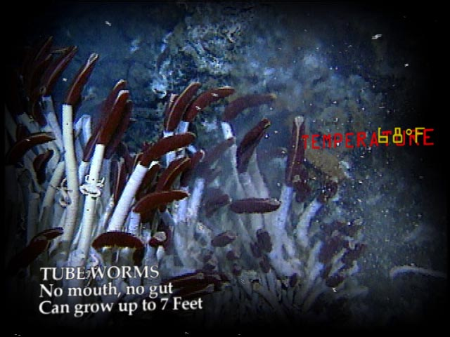 chemosynthesis in hydrothermal vents