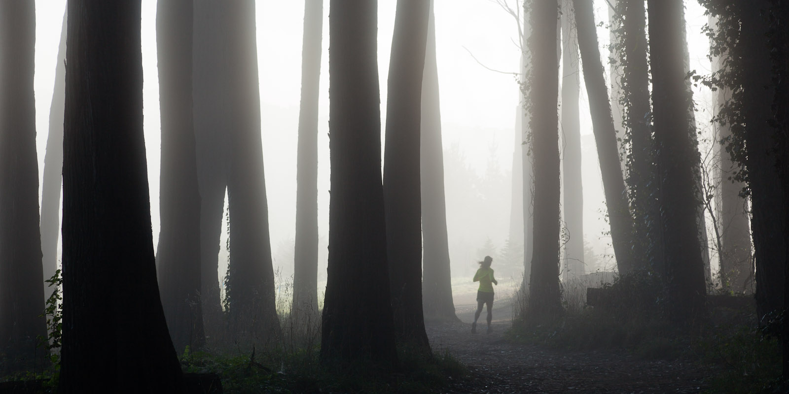 A runner running through the Cypress forest in the Presidio early in the morning. Photo © 2011 Jay Graham, all rights reserved
