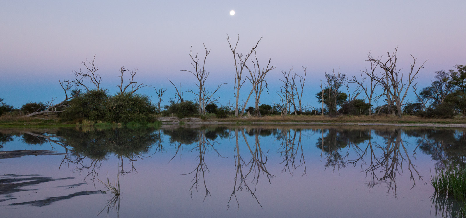 Dusk at a watering hole in the Okavango Delta, Botswana, Africa. The moon is just rising and the air is still. This is a watering hole near Chitabe Lediba Safari Camp - part of Wilderness Safaris. Photo © 2012 Jay Graham, all rights reserved