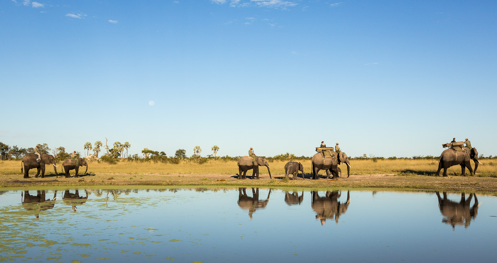 A parade of Abu Camps elephants heading out to early morning feed in the Okavango Delta, Botswana. Guests at the camp can ride the elephants or walk with them to their grazing area in the morning or when returning from the grazing area to the boma in the evening. Cliff dwelling bee-eaters on the Zambezi River in Zambia just north of Vicotria Falls, Africa. Photo © 2012 Jay Graham, all rights reserved