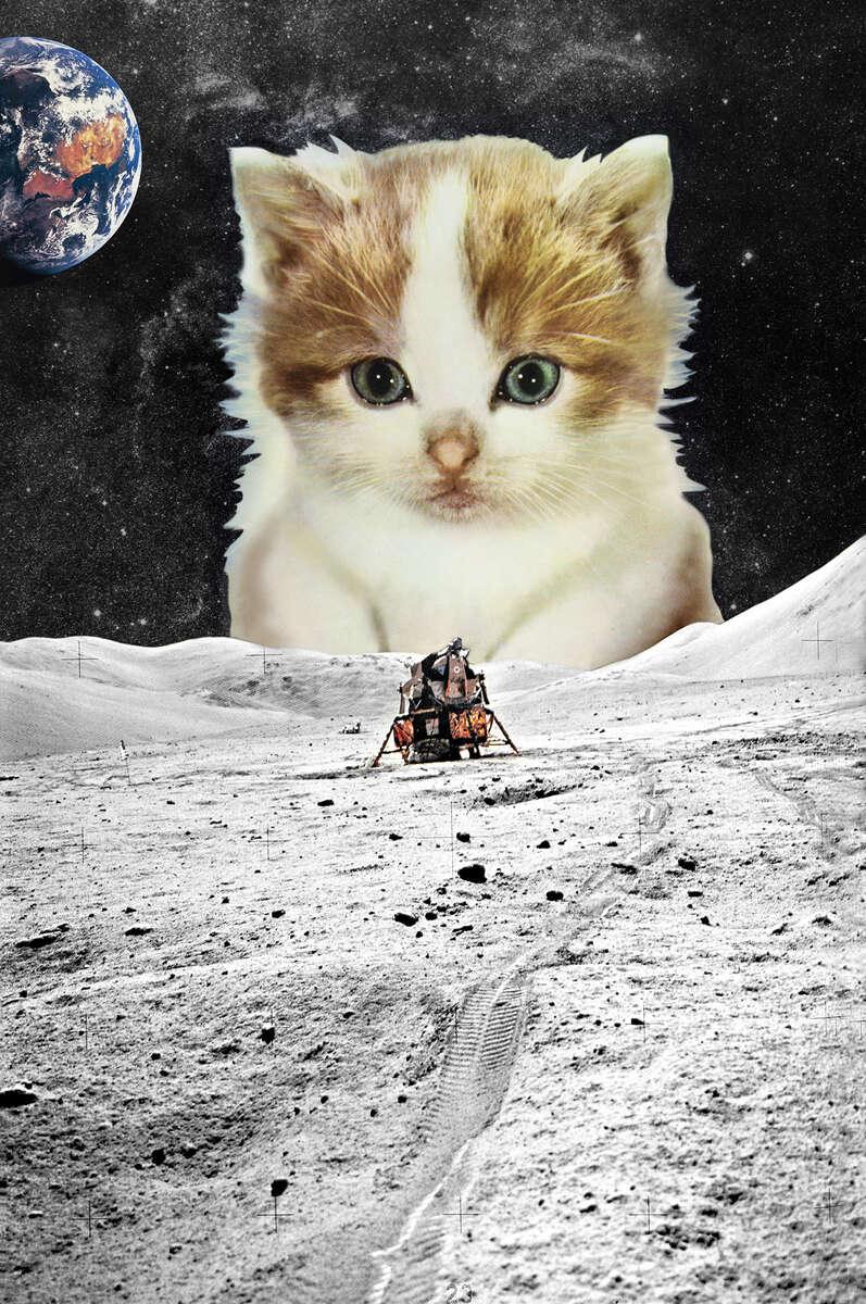 Schrodinger's Cat, 2019