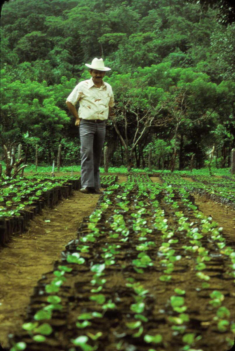 COFFEE-FARMER