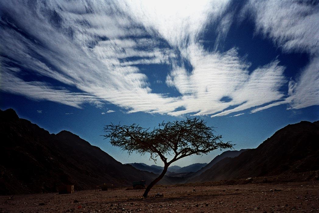Sinai desert, Egypt