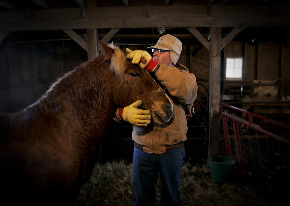 Steve Yates grooms his Josey after a sleigh ride.
