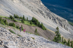 Kananaskis-HaLing-Mountain-Wedding-Photography-AA-017