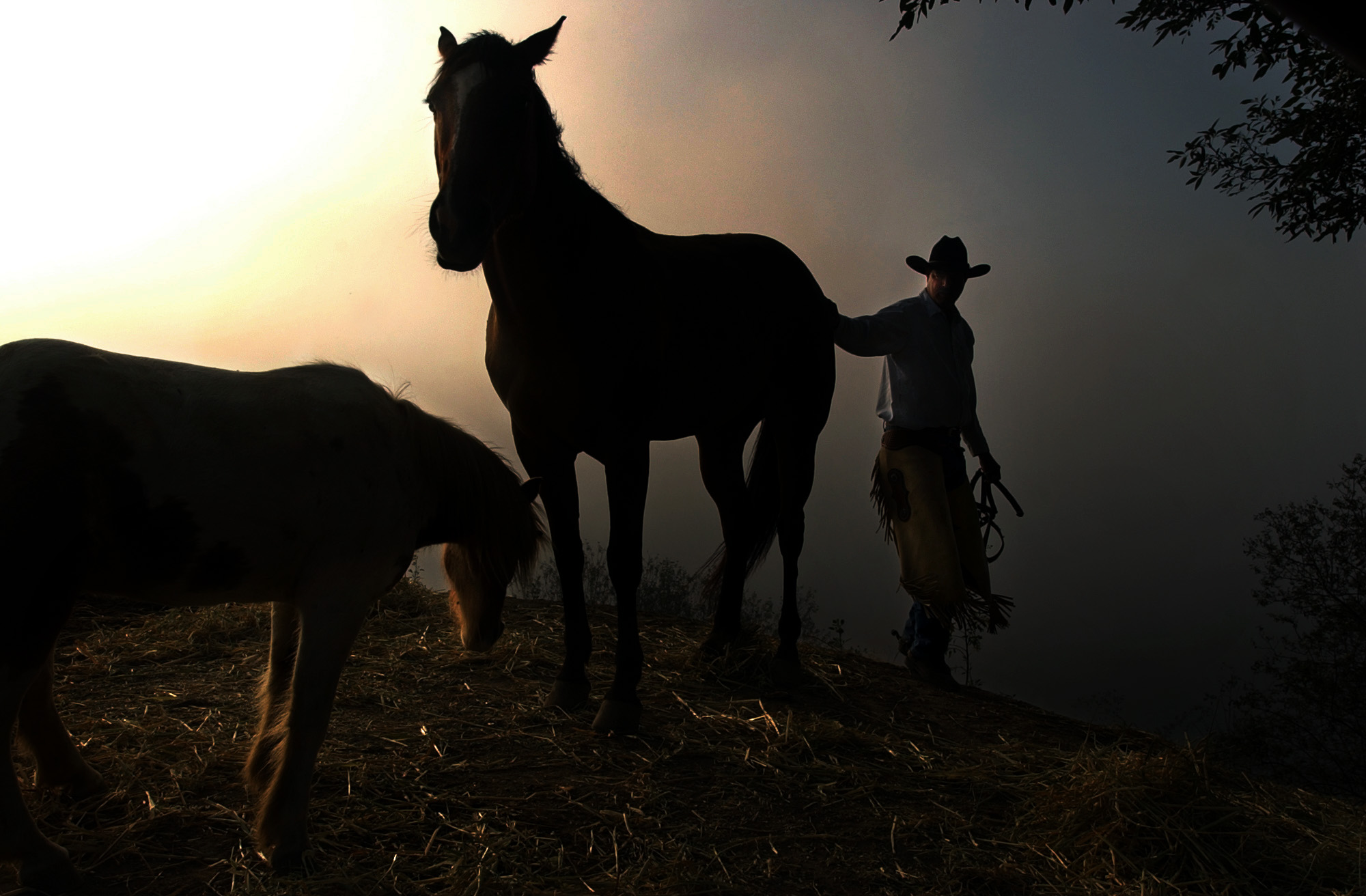 In a morning fog, cattle rancher, Richard Atmore Jr. tries to round up a pony on at his Ventura, Calif. ranch.  Photo by Matt McClain