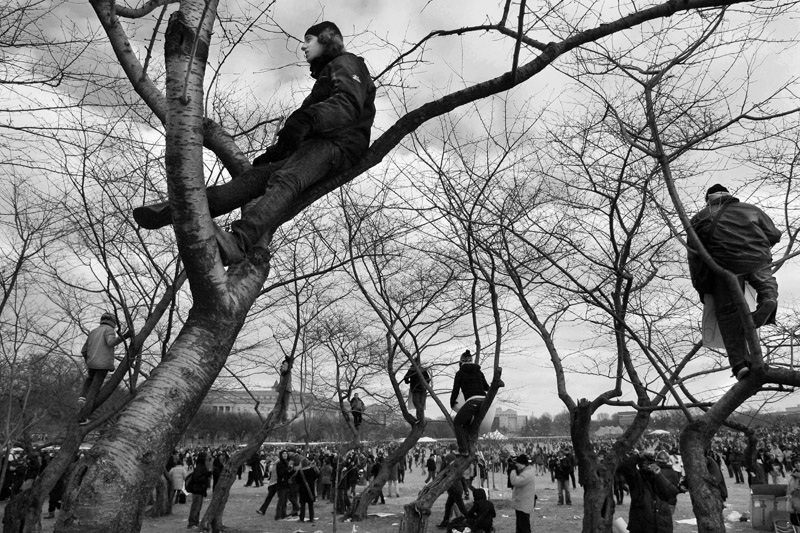 A handful of people climb trees along the National Mall tot get a better view of the swearing in ceremony.  Photo by Matt McClain