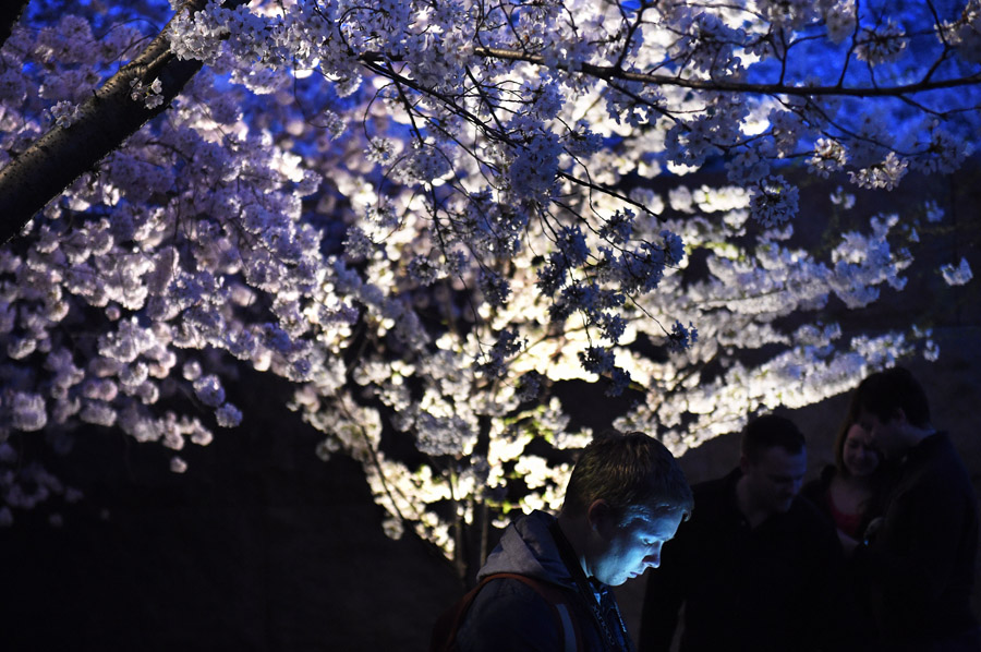People explore the cherry trees in bloom at night near the Franklin Delano Roosevelt Memorial on Saturday April 11, 2015 in Washington, DC. (Photo by Matt McClain/ The Washington Post)