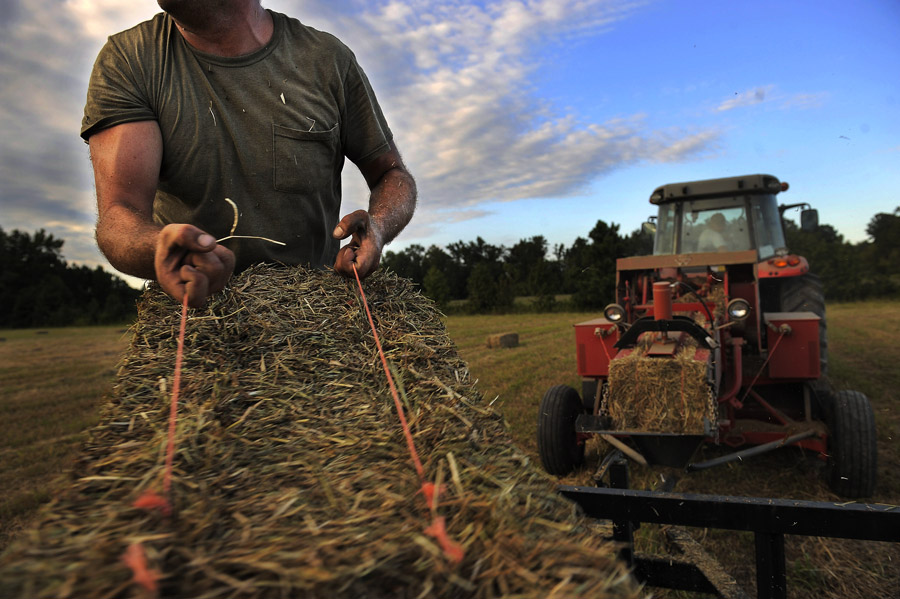 Ben Jennings stacks hay bales at property owned by Oasis Farms on Thursday September 19, 2013 in Suffolk, VA.  (Photo by Matt McClain/ The Washington Post)