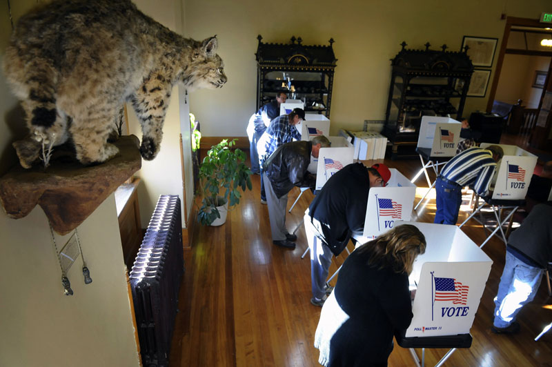 A mounted bobcat peers over the shoulder of voters as they cast their vote at the Gilpin County Courthouse in Central City, Colo. on Tuesday, Nov. 2, 2010.  Colorado was the site of a Governor's race as well as a hotly contested Senatorial race between Michael Bennet and Ken Buck.  (Photo by Matt McClain for Getty Images)