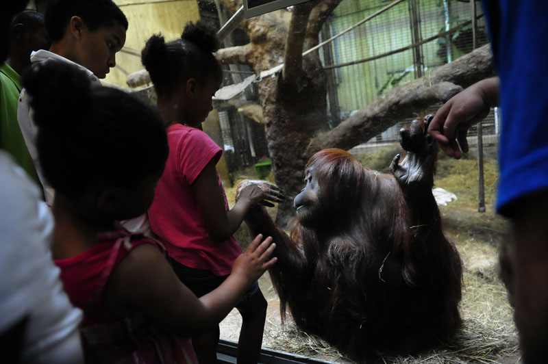 Xavier Simpson, 12, far left, Imani Green, 5, second from left, and Sky Nelson, 8, view an orangutan at the Smithsonian National Zoological Park on Sunday June 24, 2012 in Washington, DC.  The Smithsonian National Zoological Park got its start in the late 1800's.  (Photo by Matt McClain for The Washington Post)