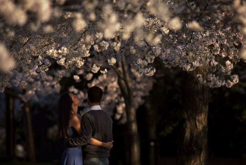 Taking a break from an engagement photo shoot, Deirdre Dorval, left, embraces Matt Wells, both of Washington, DC, as they wait for their photographer to return while surrounded by blooming cherry blossoms near the Tidal Basin on Monday March 19, 2012 in Washington, DC.  Tuesday signals the first day of spring.  The National Cherry Bloosom Festival also begins Tuesday March 20, 2012 and runs through April 27, 2012.  (Photo by Matt McClain for The Washington Post)