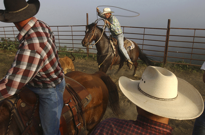 Richard Atmore, left, and Tucker Robinson, center, practice their skills roping calves as a fog rolls into the hills surrounding Atmore's ranch in Ventura, Calif.  Photo by Matt McClain