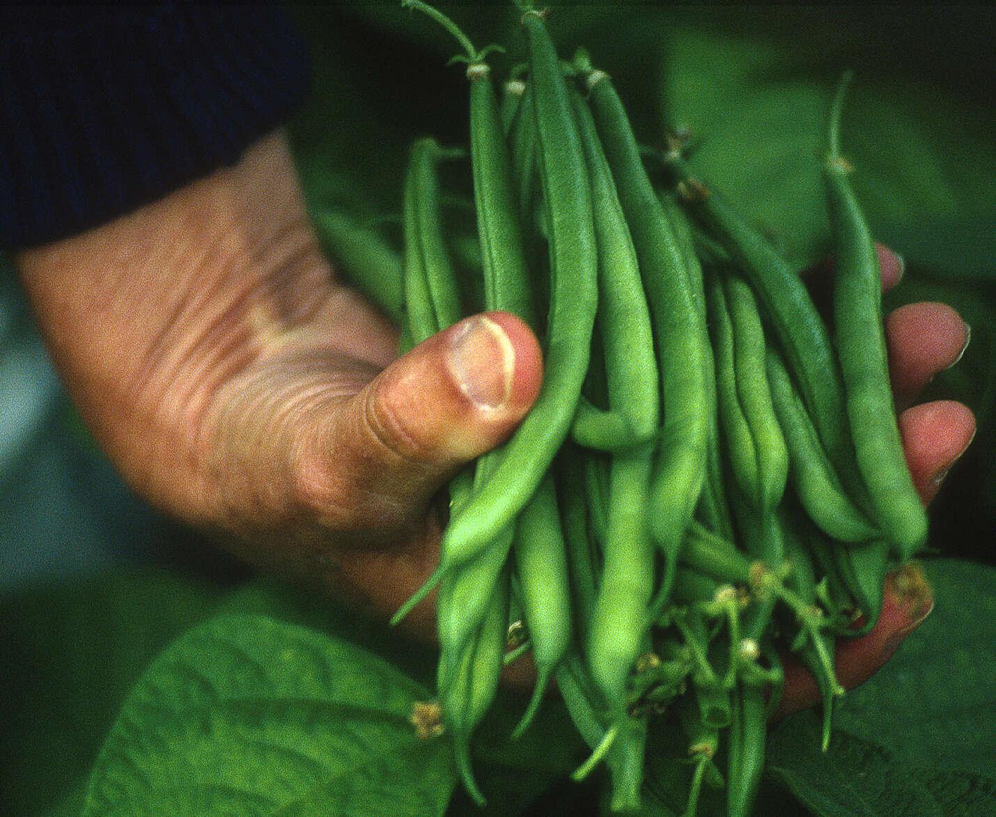 BeansFinal