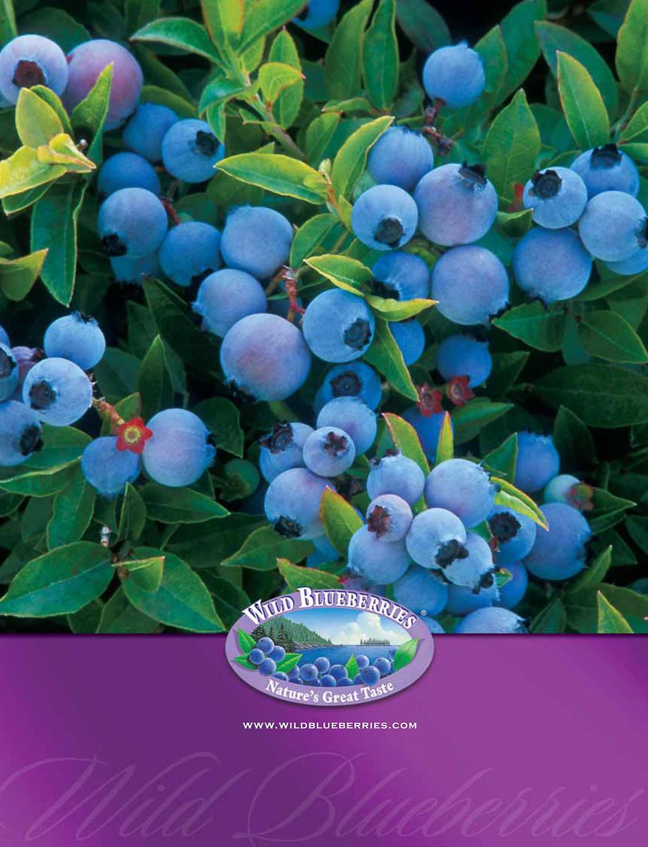 Blueberry-brochure-1