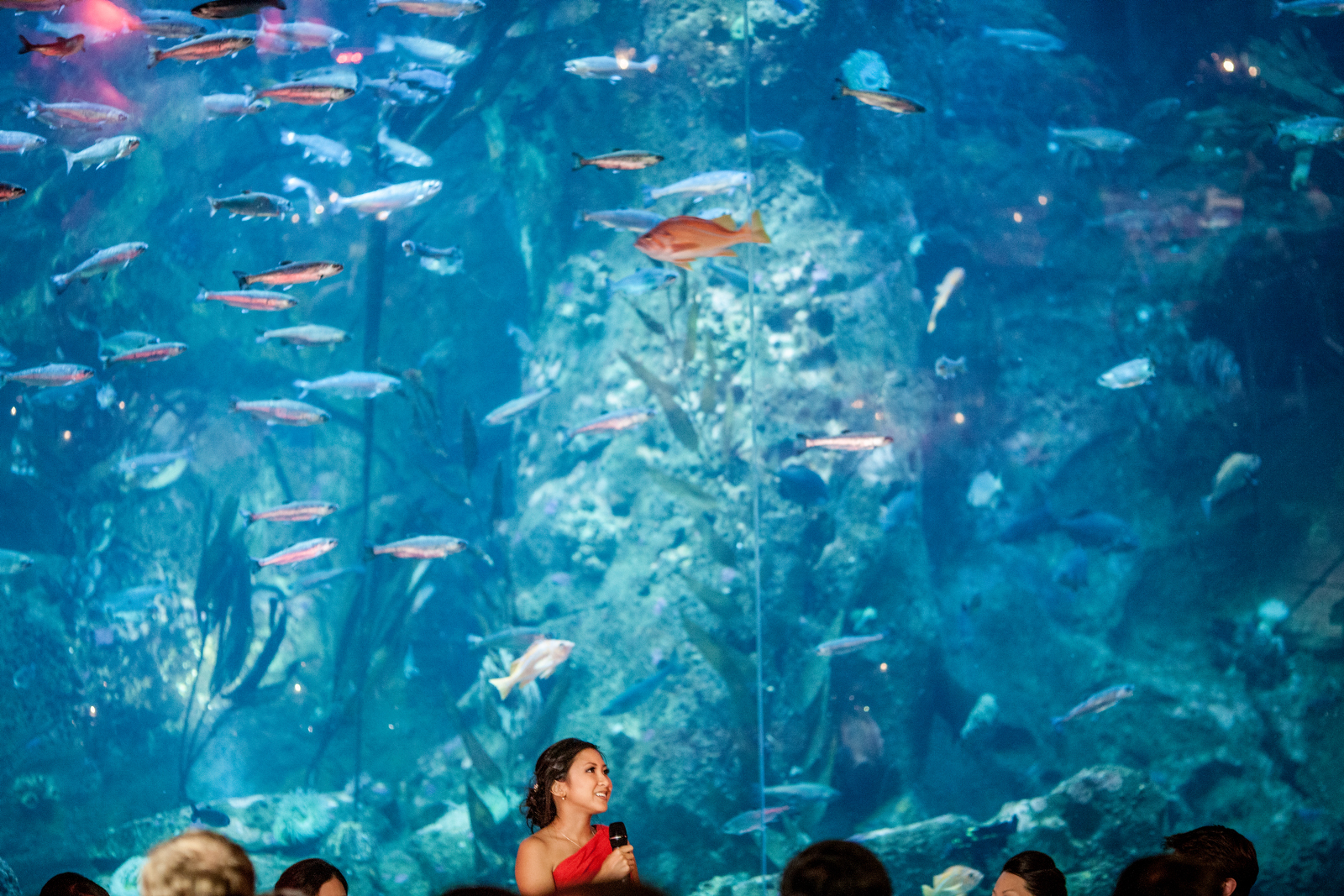 A bridesmaid gives a speech in front of the big fish tank during the reception of Alina & Patrick at the Seattle Aquarium. (Wedding Photography by Scott Eklund - Red Box Pictures)