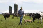 Fifth generation Lynden farmer Shawn Langley walks among his 180 dairy cows on the land his great-grandfather homesteaded in the late 1800's. A few years ago, he and his wife Clarissa converted their dairy, Fresh Breeze, to certified organic.