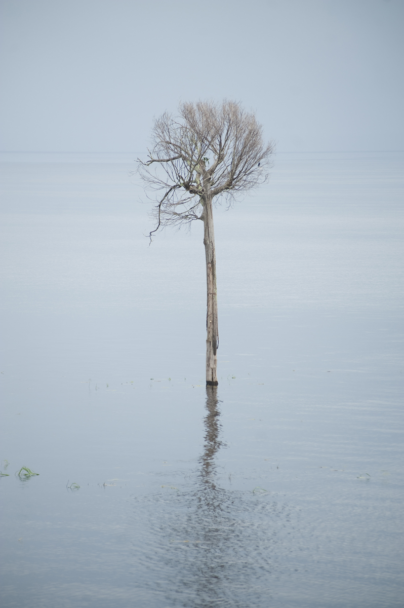 A lone tree in the Rio Negro in Manaus.
