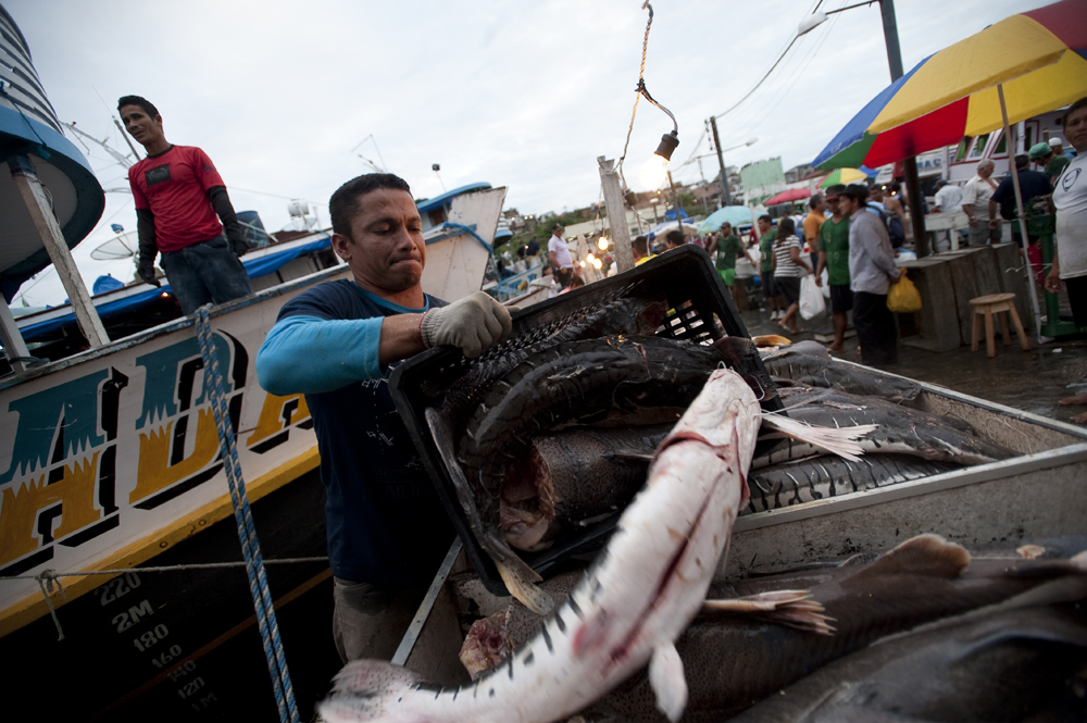 A fisherman unloads his catch in the bustling port on the Rio Negro in Manaus, Brazil on Saturday, March 10, 2012.