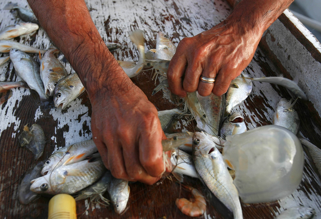 Deck hand Ed Bass sorts through the contents of the net for shrimp on a shrimping run on Walter Jakubas' shrimp boat called {quote}Persistence{quote} Friday August 4, 2006. Jakubas owns several shrimp boats and a marina in San Leon and his son, Robert Jakubas, owns two seafood restaurants in San Leon that use shrimp his father catches and brings directly to the restaurant. Sharon Steinmann/ Houston Chronicle