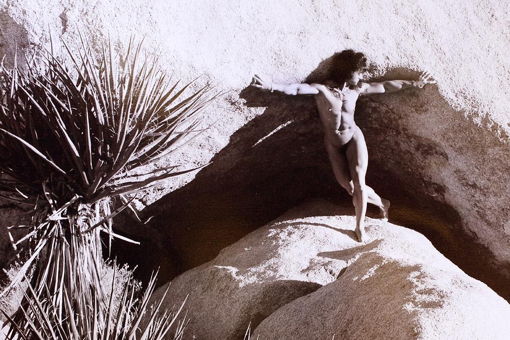 Dorothy_Compton-cactus