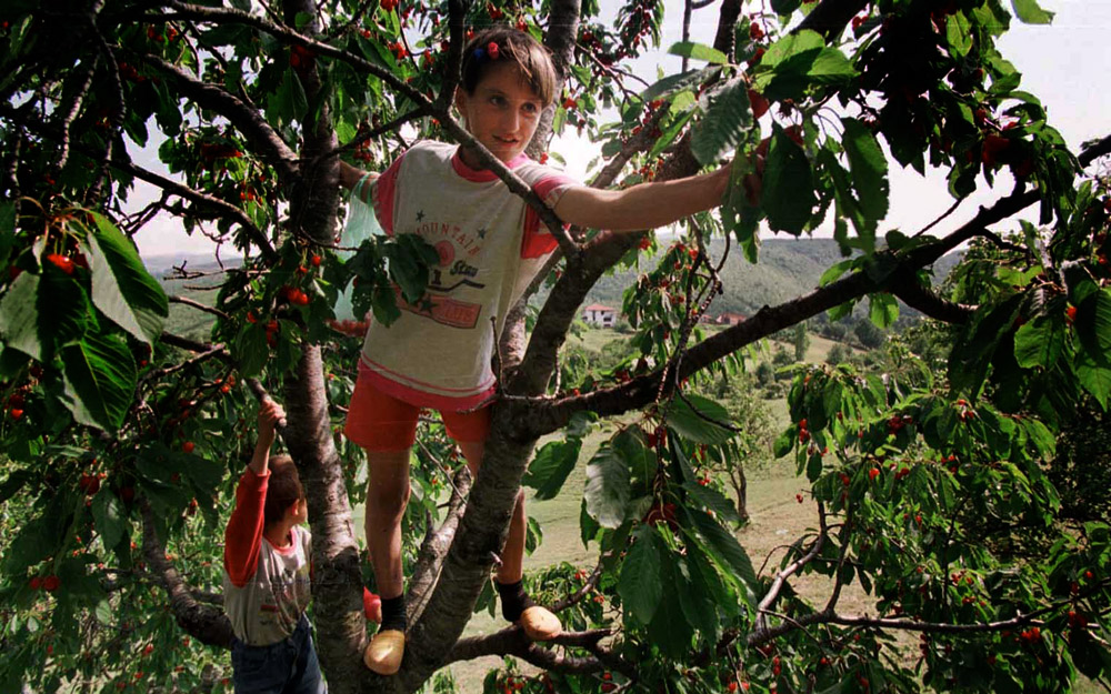 Back at her home, a young Kosovar picks fresh cherries.