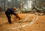 Keith Davis, a member of Washington Task Force One Search and Rescue squad praises search and rescue dog, Asher, while conducting operations Sept. 15, 2020, in Blue River, Oregon in areas affected by the Holiday Farm Fire. (pool photo by Andy Nelson/The Register-Guard)
