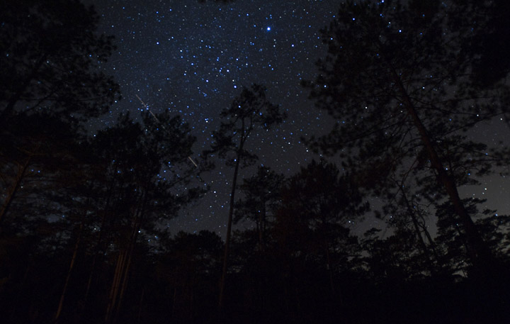 Stars shine brightly through pine trees at the base camp established by Vietnamese rangers for the research expedition of the Lamont-Doherty Earth Observatory tree ring laboratory in Bidoup Nui Ba National Park near Dalat, Vietnam.