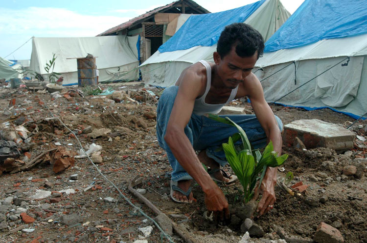 Alamsyah plants coconut palm trees around the perimeter of his home in the Lampulo neighborhood of Banda Aceh, Indonesia. He got the sprouts from a nearby village and hopes they will bear coconuts in three years.
