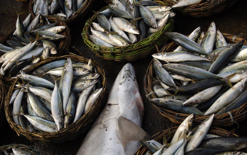 Baskets full of tuna and a shark wait on the dock in Lampulo to be distributed to markets throughout Banda Aceh, Indonesia.