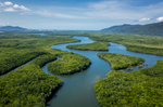 Aerial view of mangrove ecosystem, Cairns