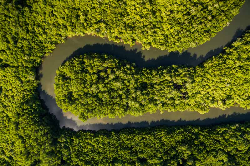 Aerial view of tropical mangrove ecosystem, Cairns