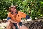 An avacado farmer inspecting fruit on the tree, Atherton Tablelands