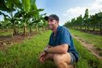A banana farmer standing in rows of banana trees on his plantation near Innisfail
