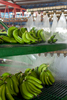 Harvested bananas being mechanically washed at a banana farm packing shed, Innisfail