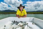 A barramundi farm manager icebox filled with harvested barramundi fish, near Cairns