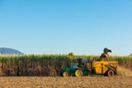 Sugar cane fields being harvested by mechanical harvester, Cairns