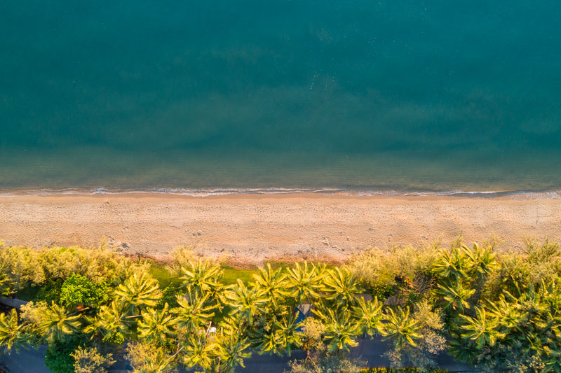 Aerial view of coconut palms lining tropical beach at Palm Cove, Cairns