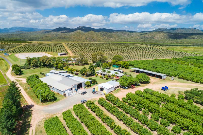 Aerial view of mango farm and packing shed at Mutchilba, Atherton Tablelands