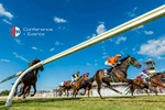 Low angle photo of horses running down the race track at the Cairns Amateurs