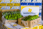 Boxes of harvested bananas packed and ready for transport, Tully