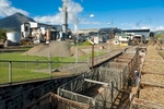 Sugar cane train bins in front of Sugar Mill, Cairns