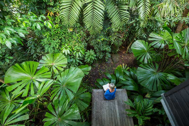 Woman sitting on back deck of house surrounded by tropical palms, Port Douglas