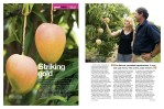Magazine Photography - Tablelands mango farming.  Inside story for Good Taste magazine.