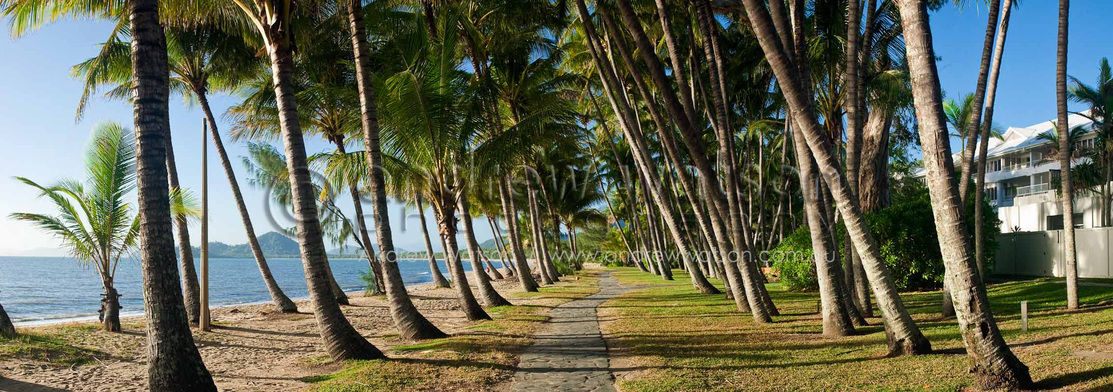 Coconut palms line the beach at Palm CoveCairns, North QueenslandImage available for licensing or as a fine-art print... please enquire