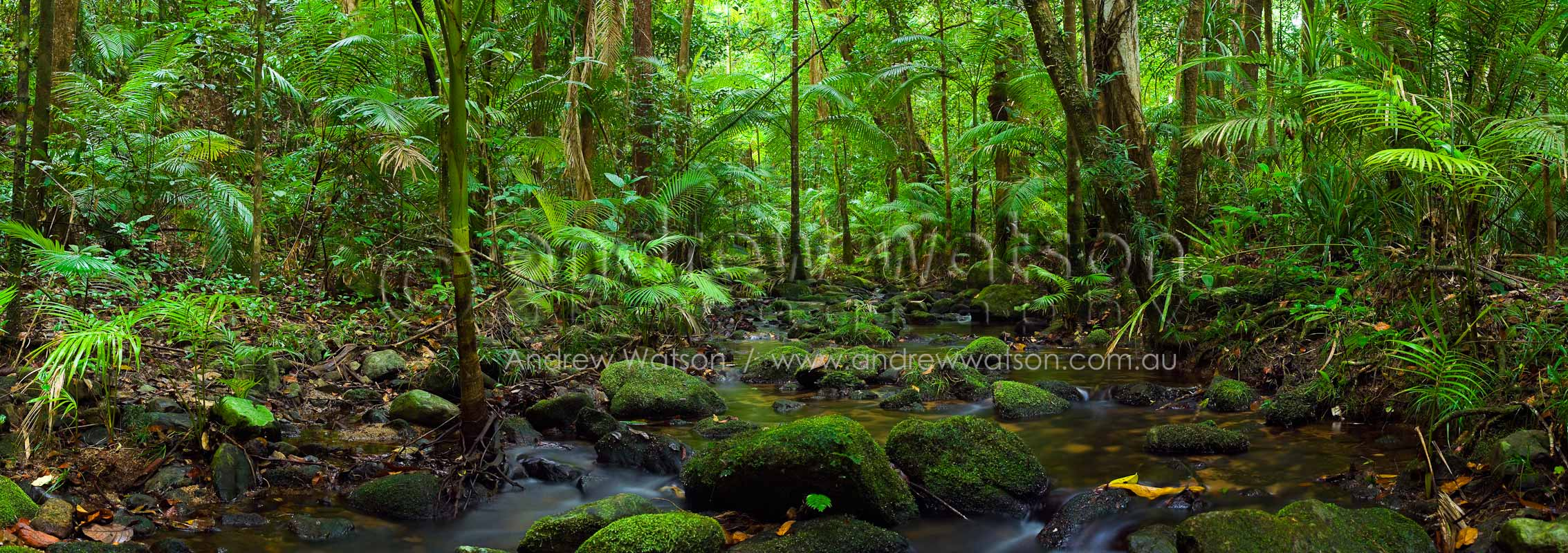 Panoramic image of a tropical rainforest stream in Daintree National Park