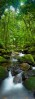Rainforest creek at Mossman GorgeDaintree National Park, North QueenslandImage available for licensing or as a fine-art print... please enquire
