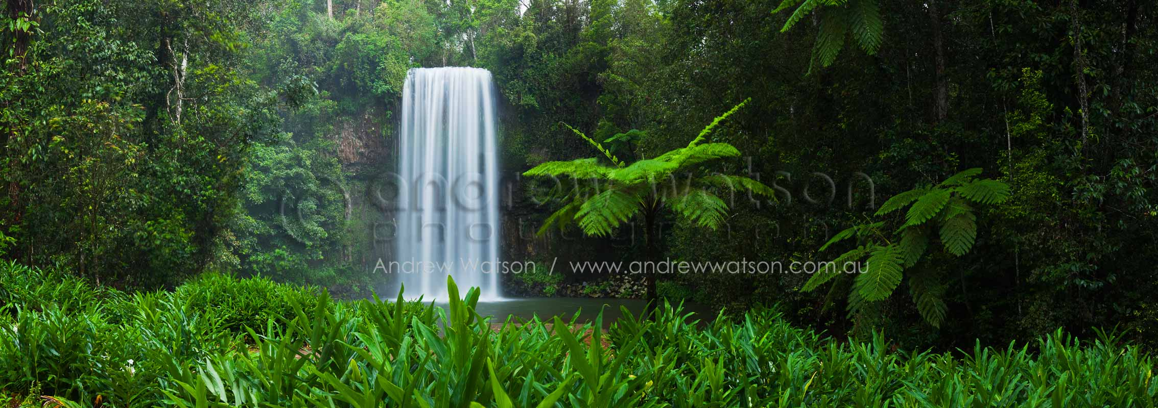 Tropical waterfall surrounded by tree ferns and rainforest