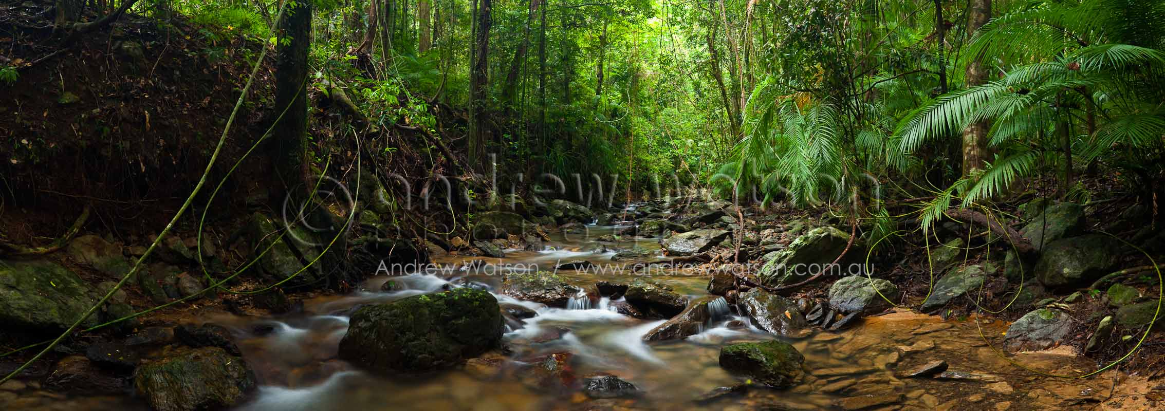 Tropical rainforest creek at Crystal CascadesCairns, North QueenslandImage available for licensing or as a fine-art print... please enquire